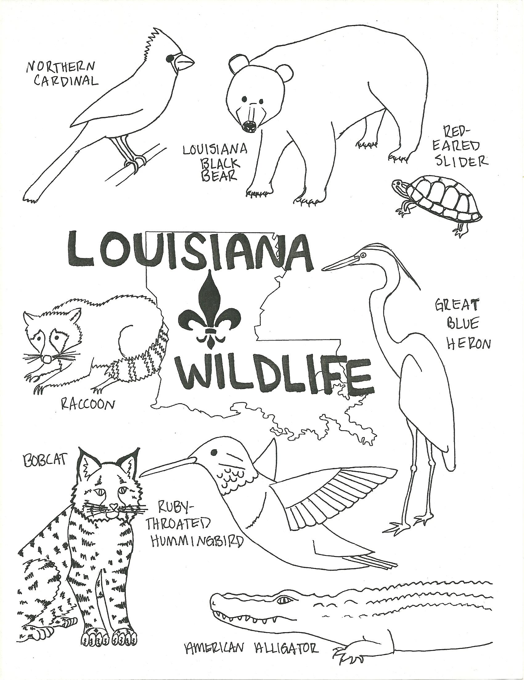Wildlife coloring #17, Download drawings
