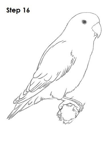 Lovebird coloring #12, Download drawings