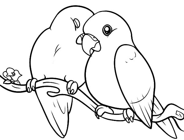 Lovebird coloring #6, Download drawings