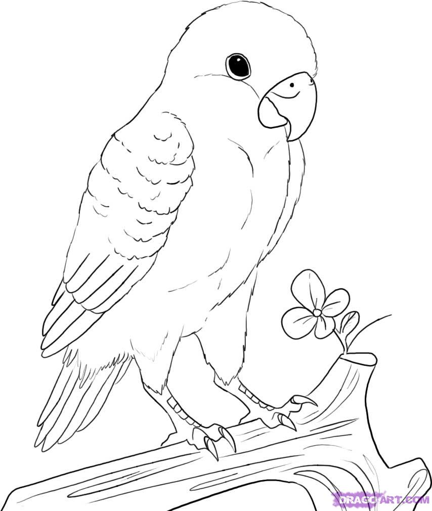 Lovebird coloring #17, Download drawings