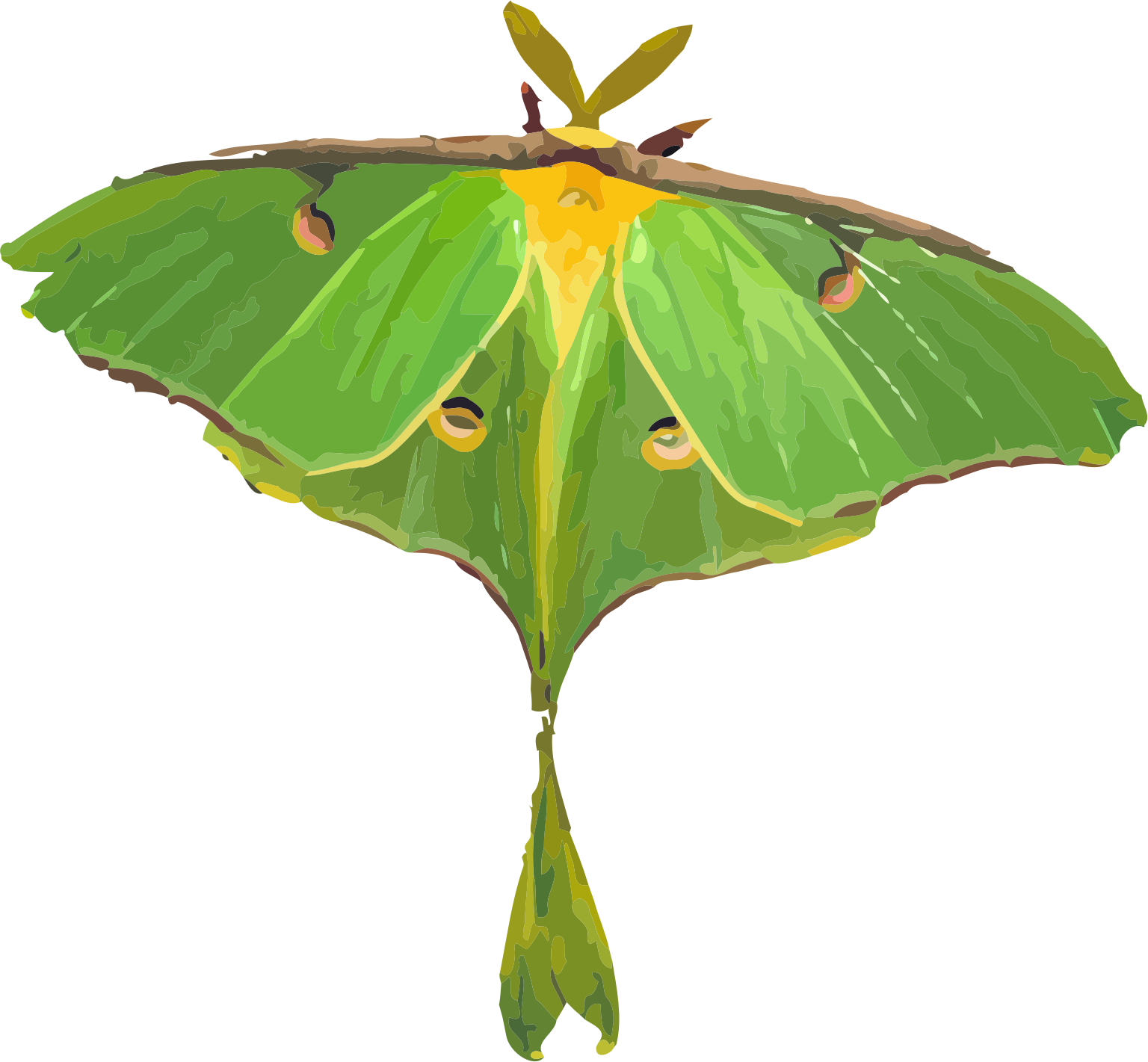 Luna Moth clipart #16, Download drawings