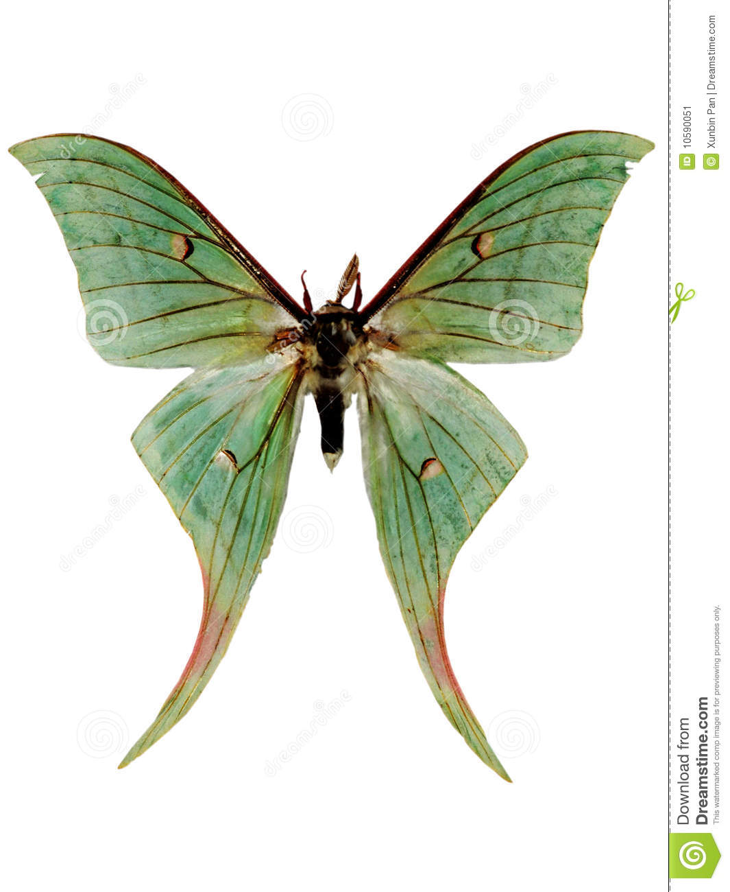 Luna Moth clipart #10, Download drawings