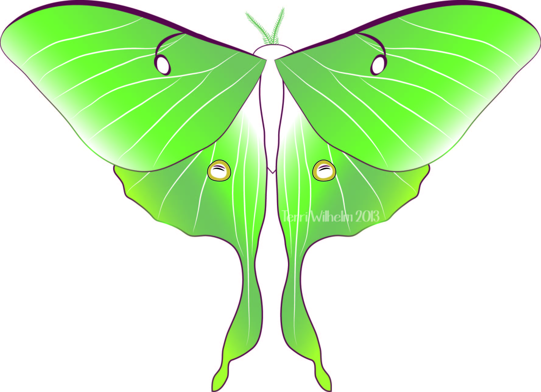 Luna Moth clipart #7, Download drawings