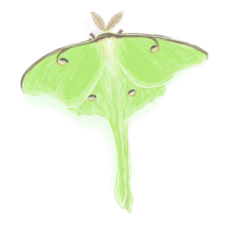 Luna Moth clipart #3, Download drawings