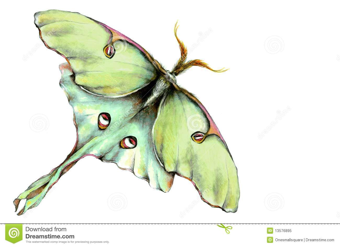 Luna Moth clipart #19, Download drawings