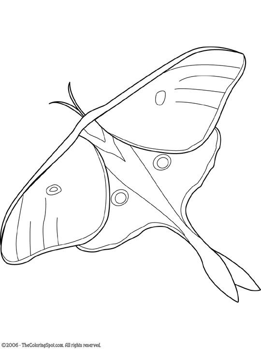 Luna Moth clipart #14, Download drawings