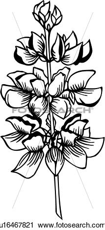 Lupine clipart #4, Download drawings