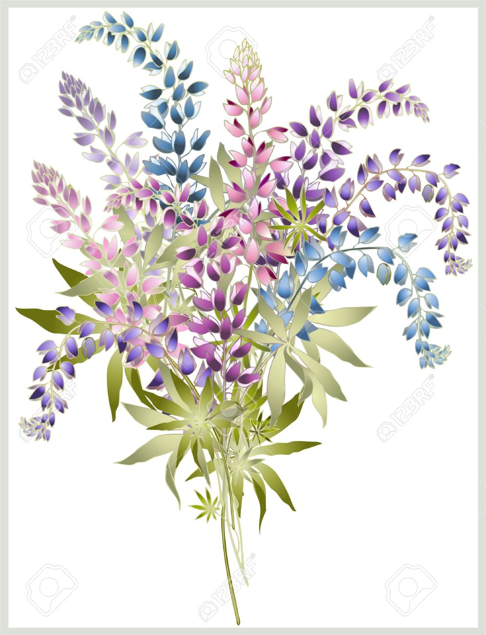 Lupine clipart #8, Download drawings
