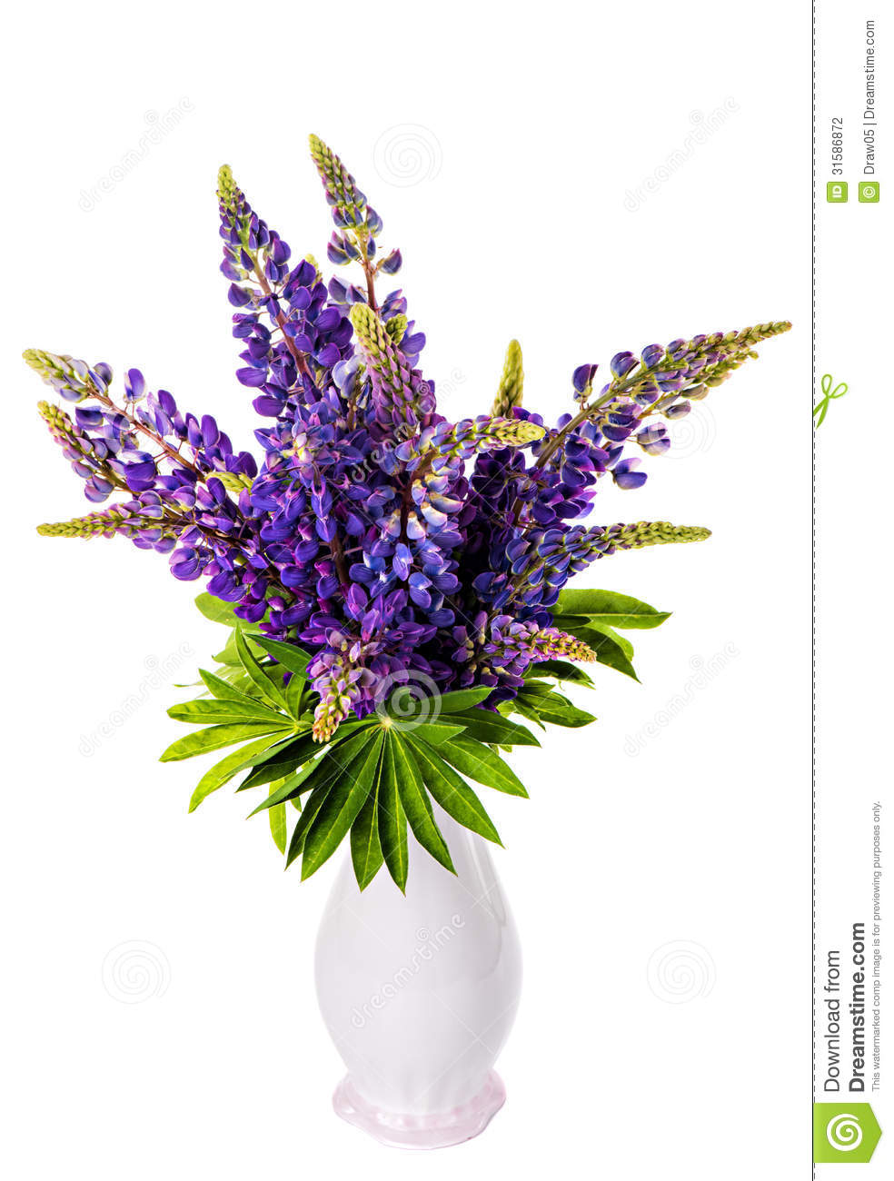 Lupine clipart #16, Download drawings