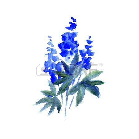 Lupine clipart #12, Download drawings