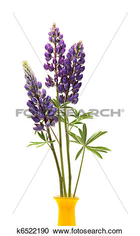 Lupine clipart #14, Download drawings
