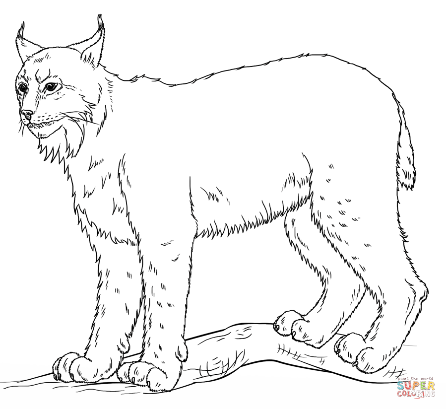 Lynx coloring #17, Download drawings