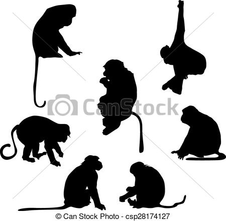 Marmoset clipart #15, Download drawings