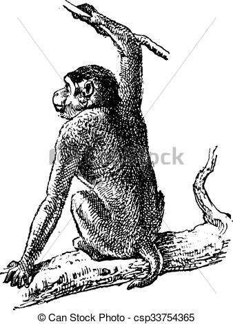 Macaque clipart #7, Download drawings