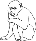 Macaque clipart #17, Download drawings
