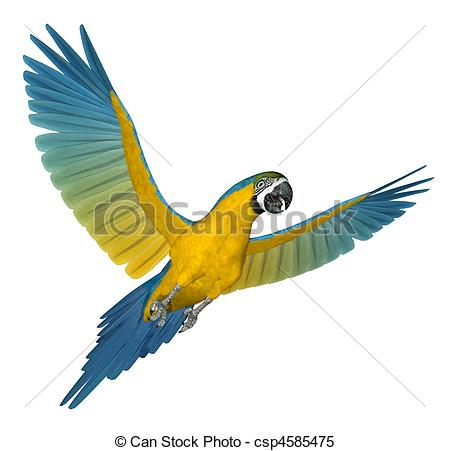 Macaw clipart #7, Download drawings