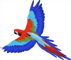 Macaw clipart #9, Download drawings