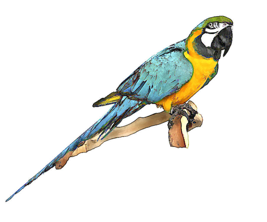 Macaw clipart #4, Download drawings