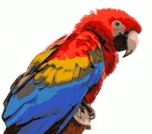 Scarlet Macaw clipart #1, Download drawings