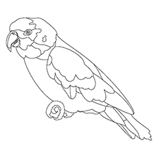 Scarlet Macaw coloring #18, Download drawings