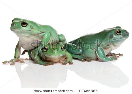 Magnificent Tree Frog clipart #11, Download drawings