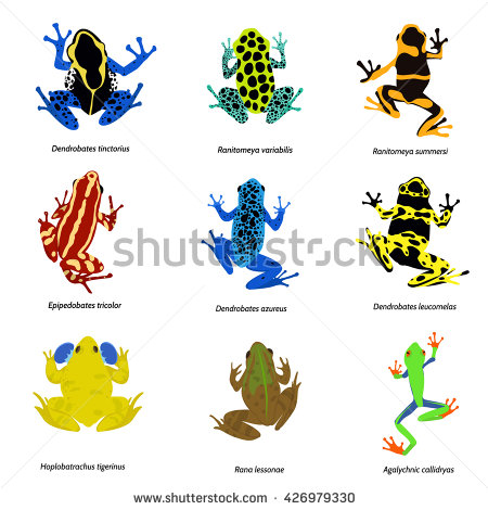 Magnificent Tree Frog clipart #7, Download drawings