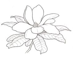 Magnolia Blossom clipart #14, Download drawings