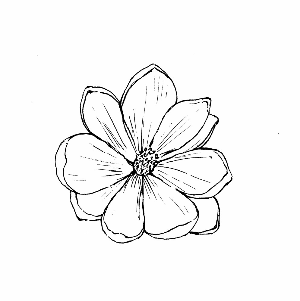 Magnolia Blossom clipart #4, Download drawings