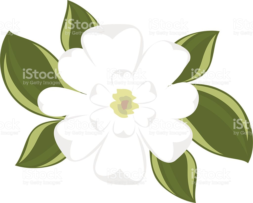 Magnolia Blossom clipart #11, Download drawings