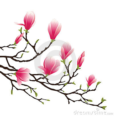 Magnolia Blossom clipart #10, Download drawings