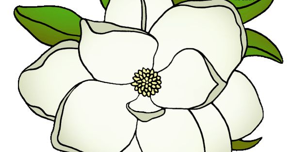Magnolia Blossom clipart #6, Download drawings