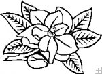 Magnolia Blossom clipart #5, Download drawings