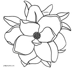 Magnolia Blossom clipart #20, Download drawings