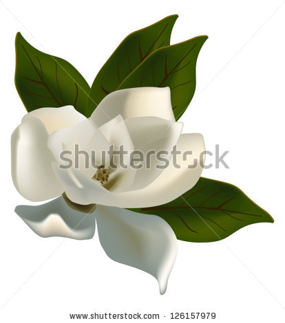 Magnolia Blossom clipart #16, Download drawings