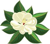 Magnolia Blossom clipart #18, Download drawings