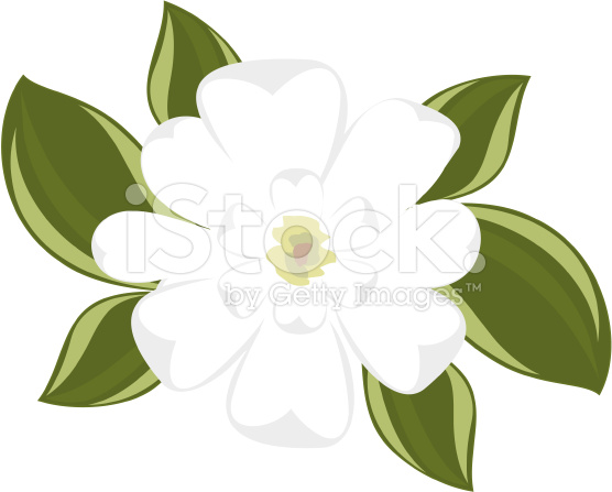 Magnolia clipart #2, Download drawings