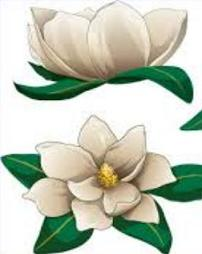 Magnolia clipart #12, Download drawings
