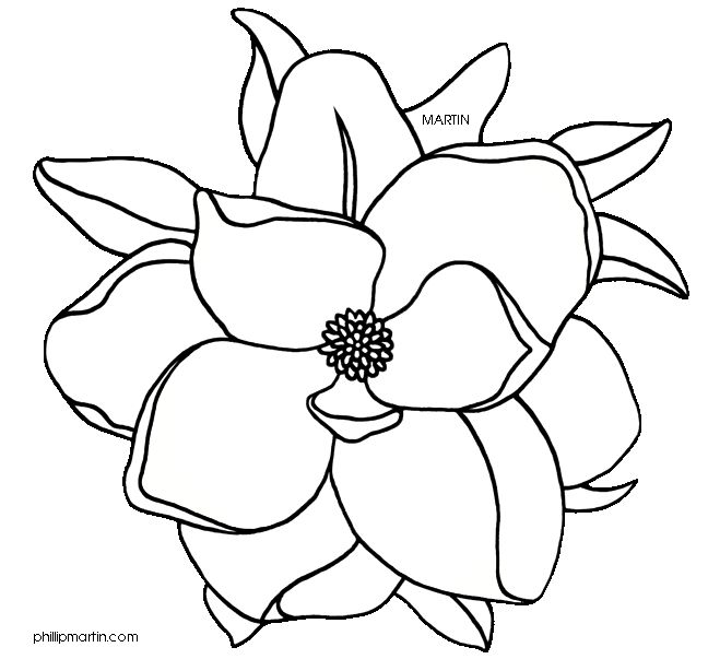 Magnolia clipart #7, Download drawings