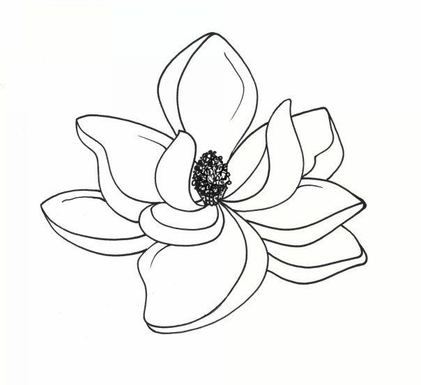 Magnolia clipart #10, Download drawings