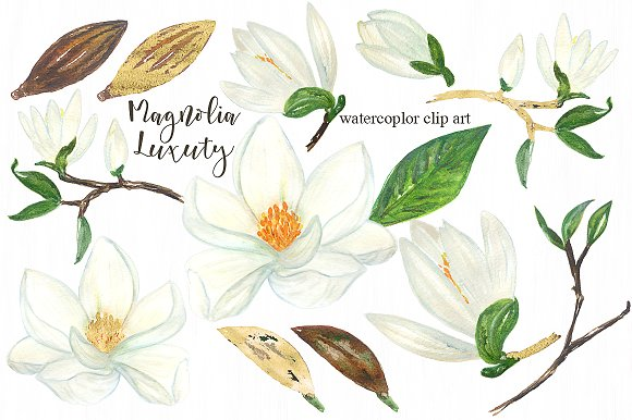 Magnolia clipart #9, Download drawings