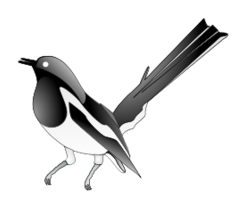 Magpie clipart #3, Download drawings