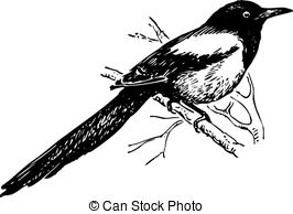 Magpie clipart #11, Download drawings