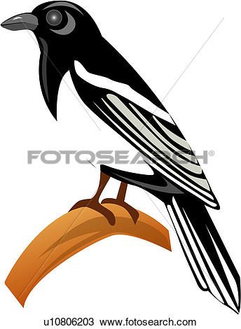 Magpie clipart #5, Download drawings