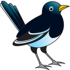 Magpie clipart #4, Download drawings
