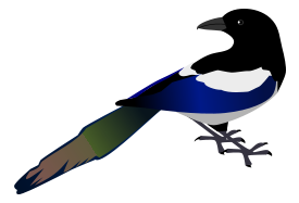 Magpie clipart #7, Download drawings
