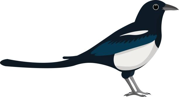 Magpie clipart #15, Download drawings