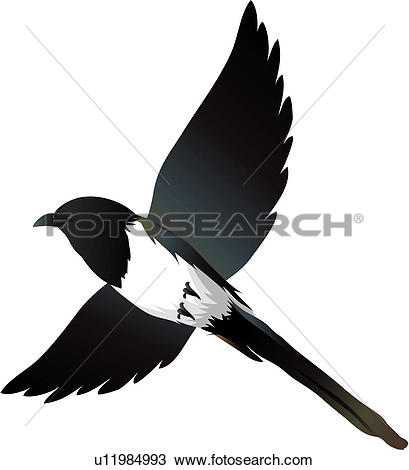 Magpie clipart #1, Download drawings