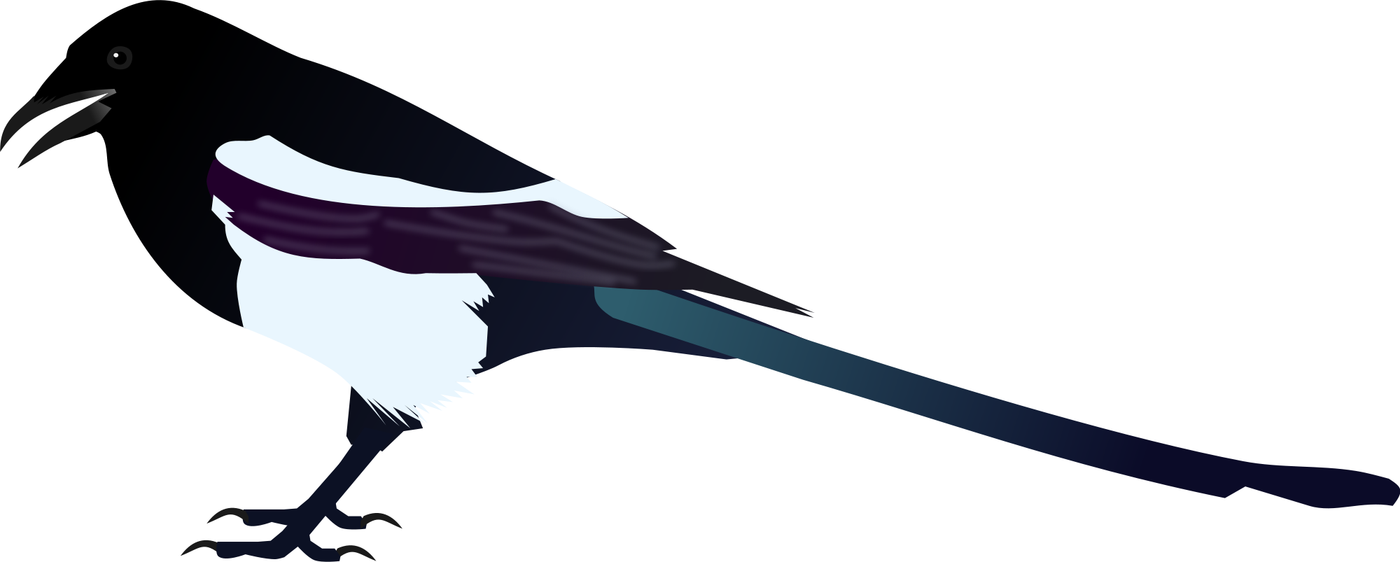 Magpie svg #20, Download drawings