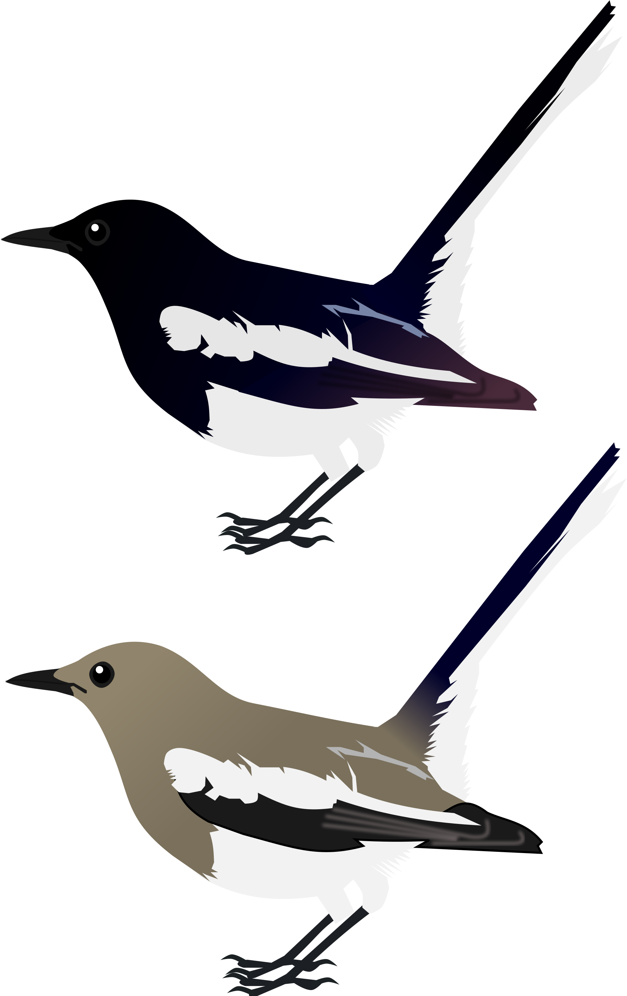 Magpie svg #19, Download drawings