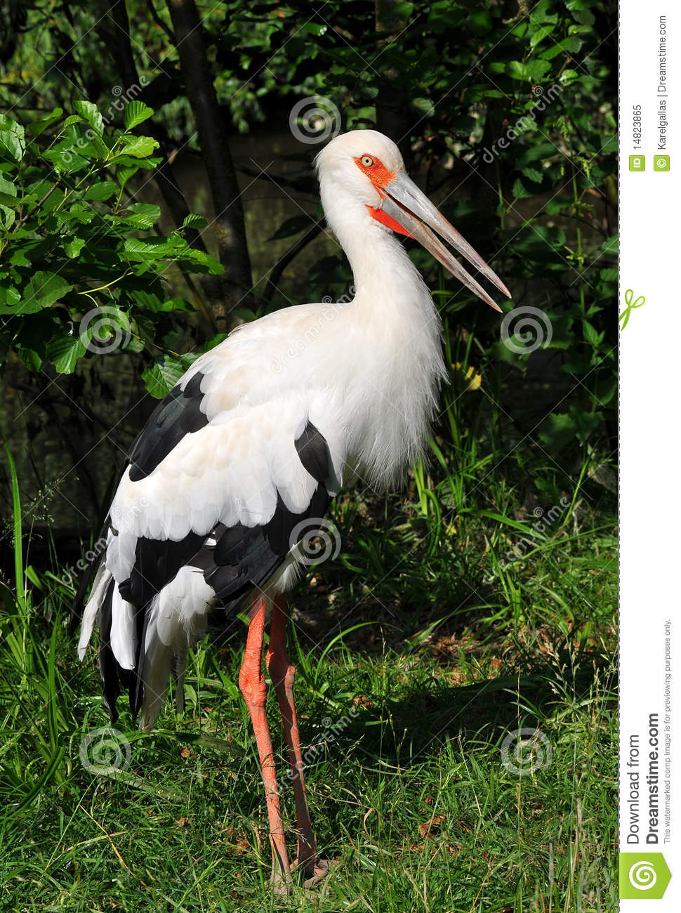 Maguari Stork clipart #20, Download drawings